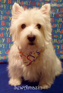Happy Birthday Bandana Collar Slipcover