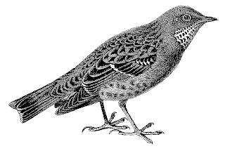 bird stock image illustration clipart download