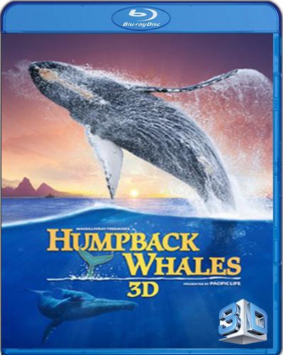 IMAX: Humpback Whales [BD25] [3D] [2015] [Latino]
