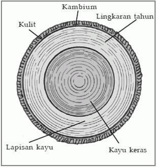 Lingkaran tahun