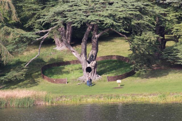 עץ עם חור