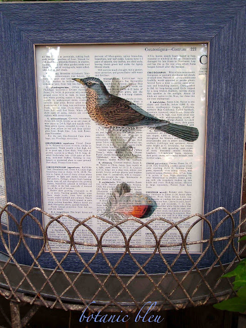 framed-speckled-bird-colored-feather-on-dictionary-page