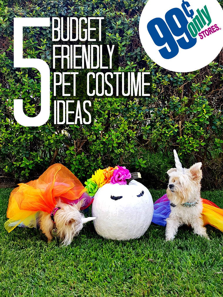 5 Budget Friendly Pet Costume Ideas #DoThe99 #99Obessed #AD