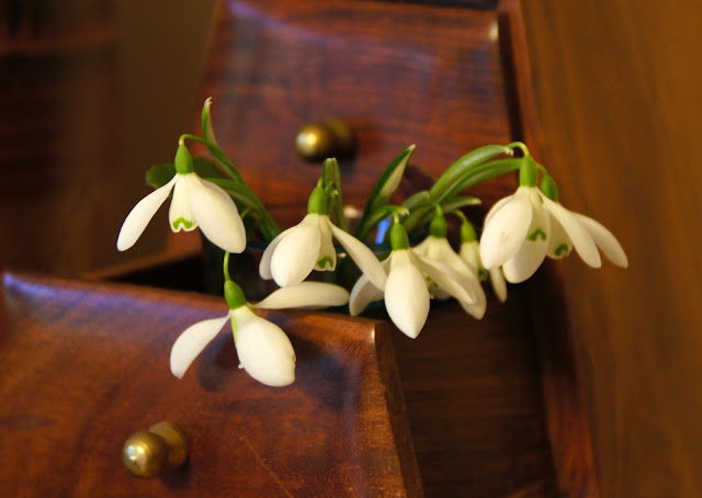 snowdrops in a drawer