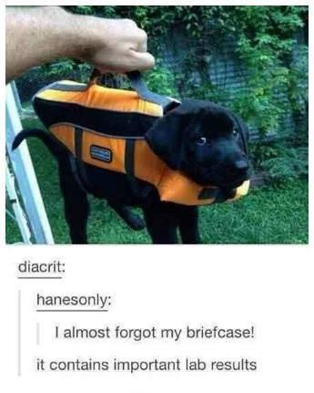 Funny tumblr memes photo