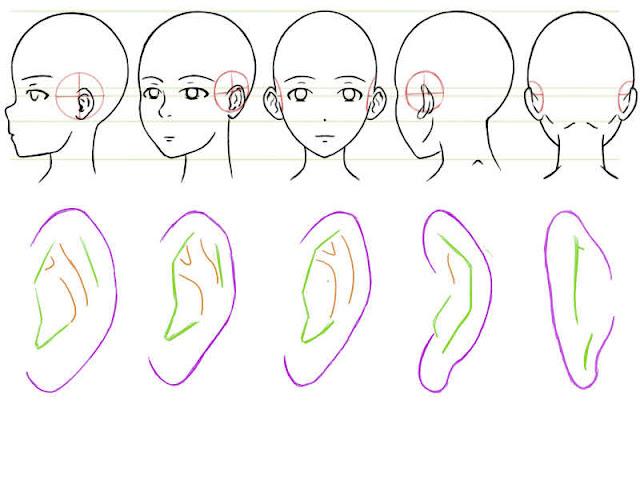 dessiner l'intérieur des oreilles