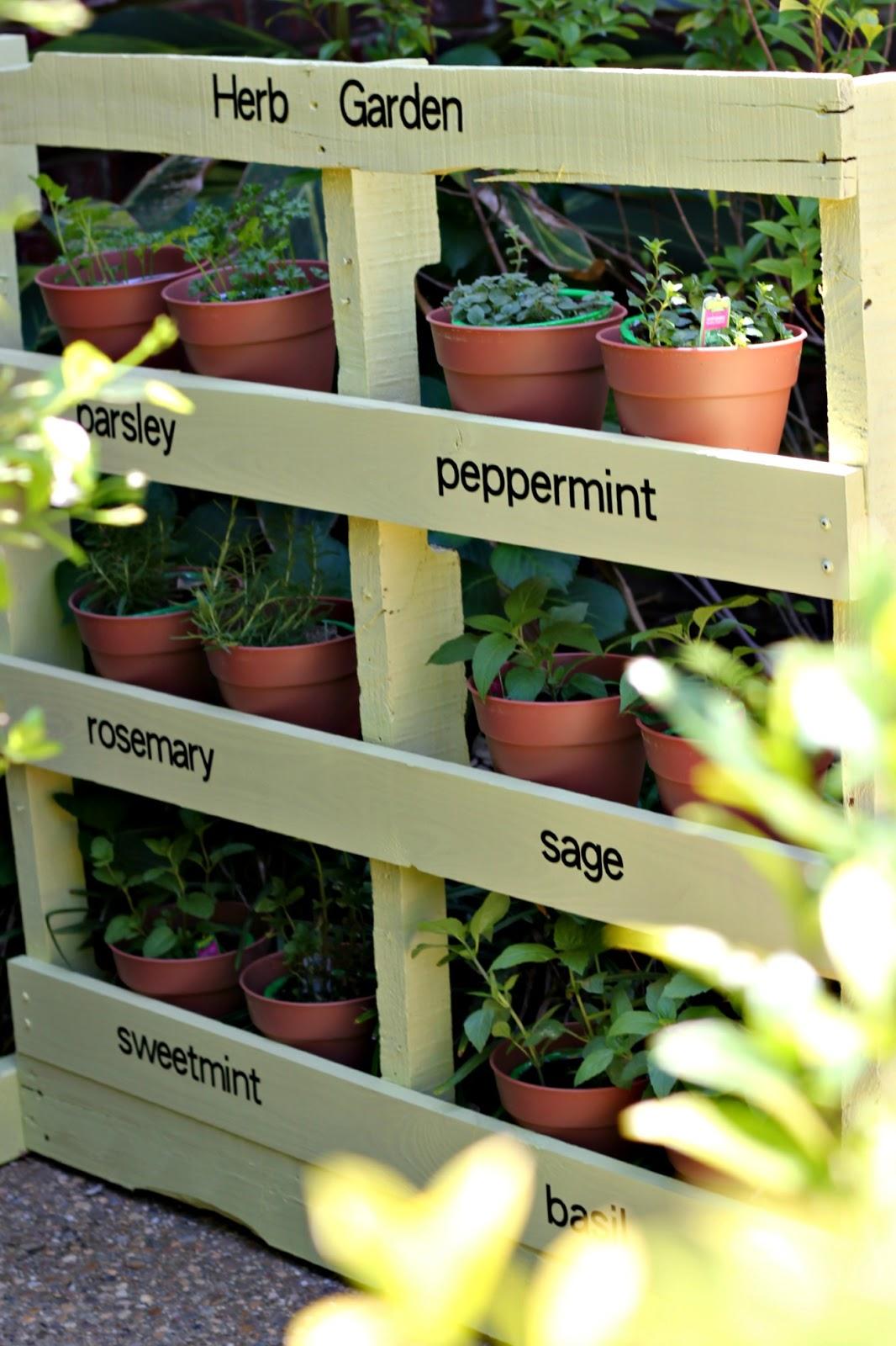 Plantas en un palé- huerto vertical