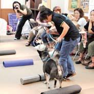 exercícios com cães para a coluna