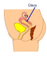 http://media.educ.ar/skoool/biologia/ciclo_menstrual/index.html