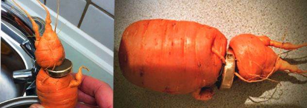 82-Year-Old Man Rediscovers His Lost Wedding Ring From A Carrot In His Garden. Find Out How!