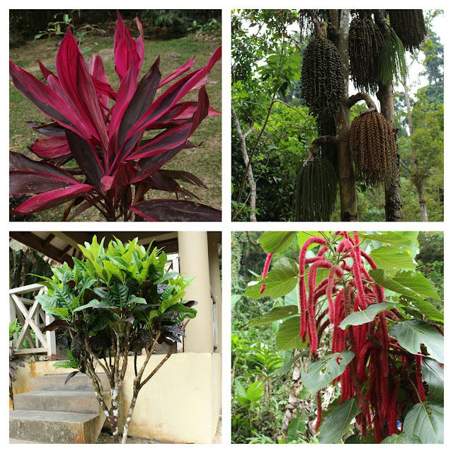 Colorful plants and herbs in the Durian Perangin waterfall area.