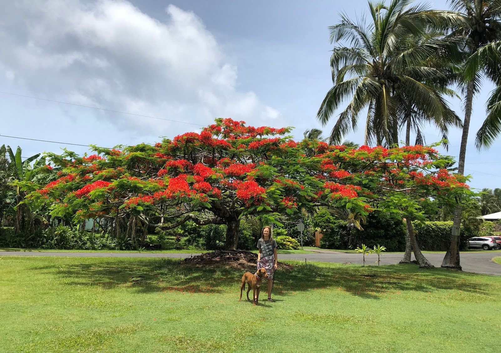A tropical life june 2018 the most beautiful tree in kapoho izmirmasajfo