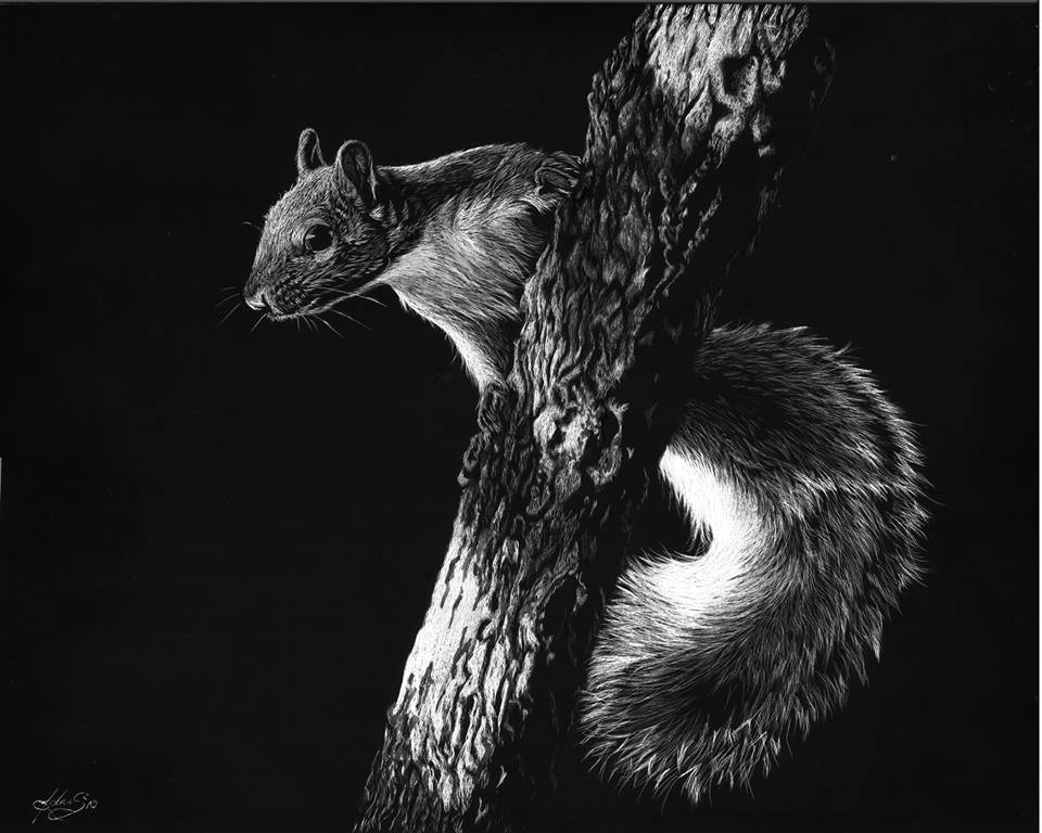 08-Squirrel-Allan-Ace-Adams-Scratchboard-Drawings-of-Wild-Animals-www-designstack-co
