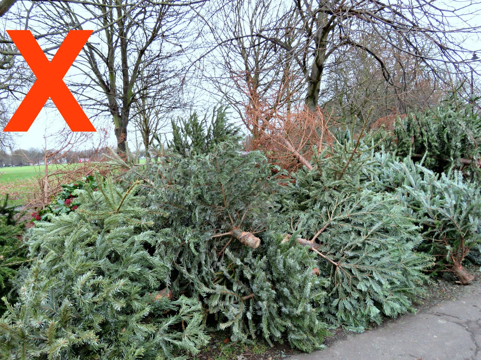Just Saying ...: Christmas Trees ... Plastic Or Real, Cut