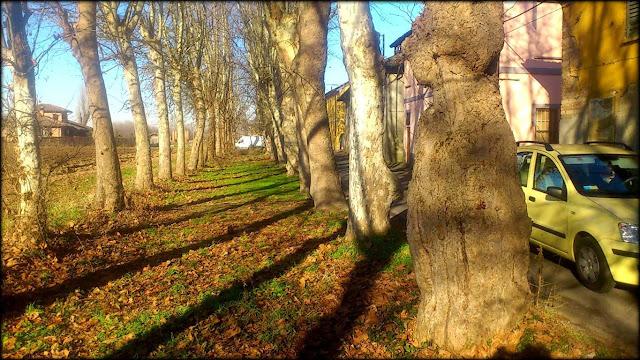 Tumori negli alberi secondo le 5 Leggi Biologiche