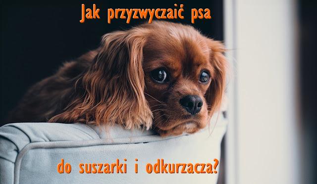 pies odkurzanie