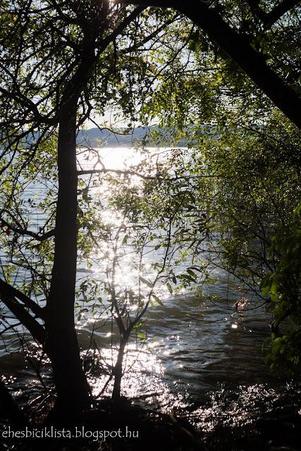 A tihanyi-félsziget nyugati oldalán a fák a vízig érnek