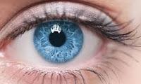 gözde renk körlüğü kadındamı erkektemi çocuktamı daha fazla görülür