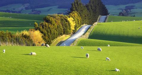 14 Fakta Menarik Tentang Negara Asal Bangsa Maori ...