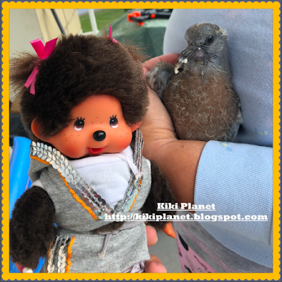 kiki monchhichi zépyrin pigeon oiseau oisillon pigeonneau