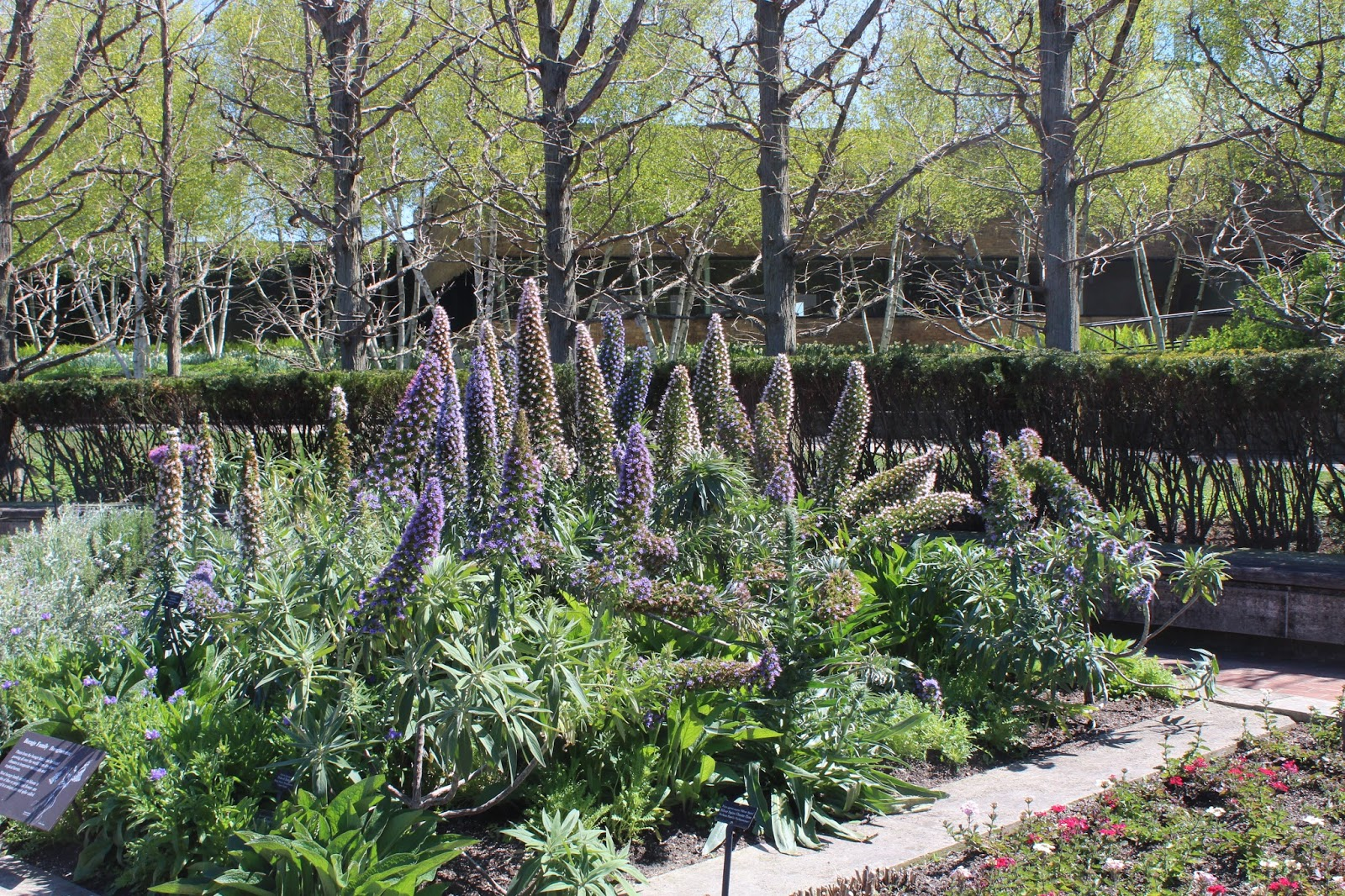 mears garden may 14 2017 we are leaving spring behind