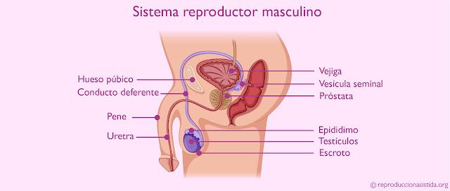 cirugía de próstata en apulia irlandas