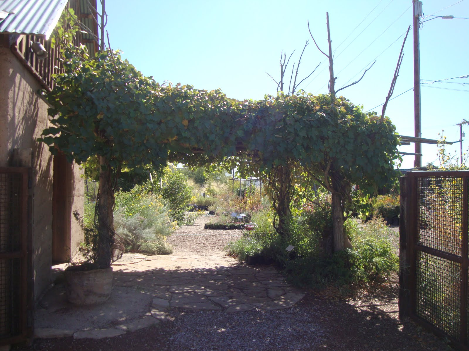 Plants Of The Southwest Is Based In Santa Fe Nm But Our Visit Was To Satellite Nursery Albuquerque We Thoroughly Enjoyed It