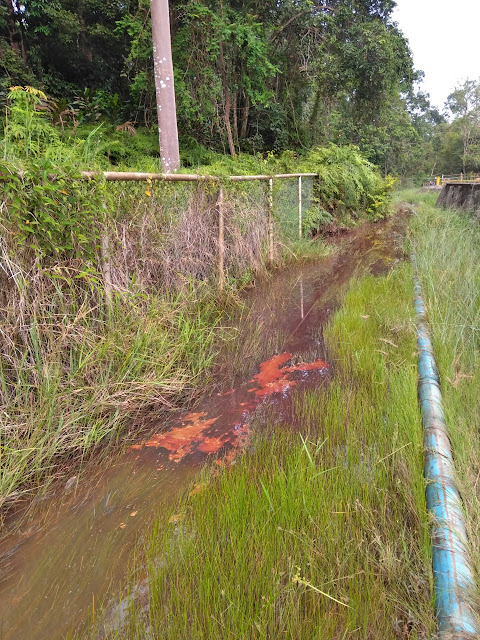 Akibat Kelalaian Rekanan Pertamina EP Jambi, Limbahnya Diduga Mencemari Anak Sungai