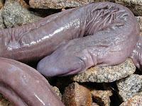 змея похожая на член фото