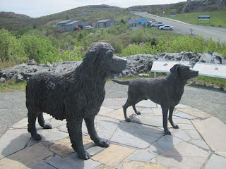 Another Pair Of Newfoundland And Labrador Dogs.
