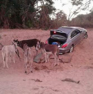 Photos: South African Police intercept vehicle being smuggled into Zimbabwe with the aid of donkeys