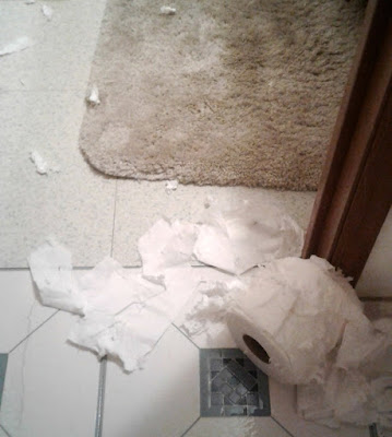 Shredded Toilet Paper - Silly Cat
