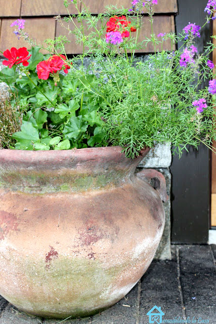 flowers on terracotta planter