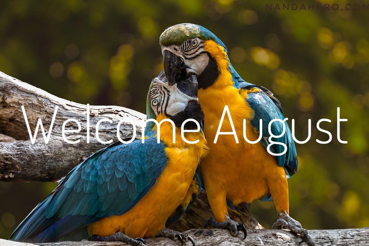 Kumpulan Gambar Hello Agustus Simpel