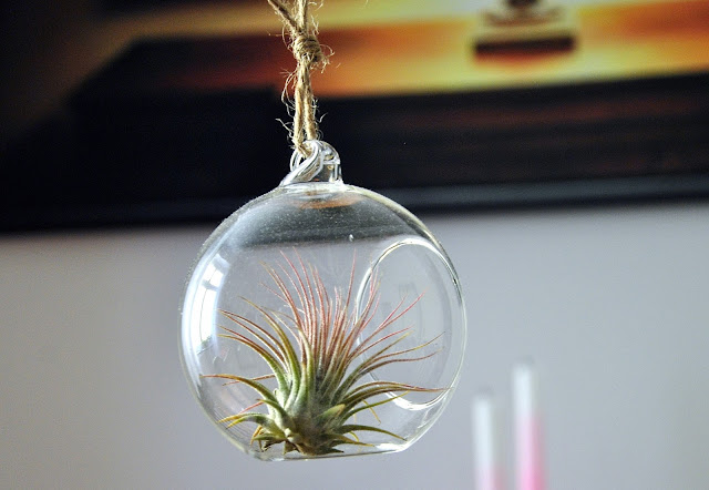 Ionantha in einer Glaskugel