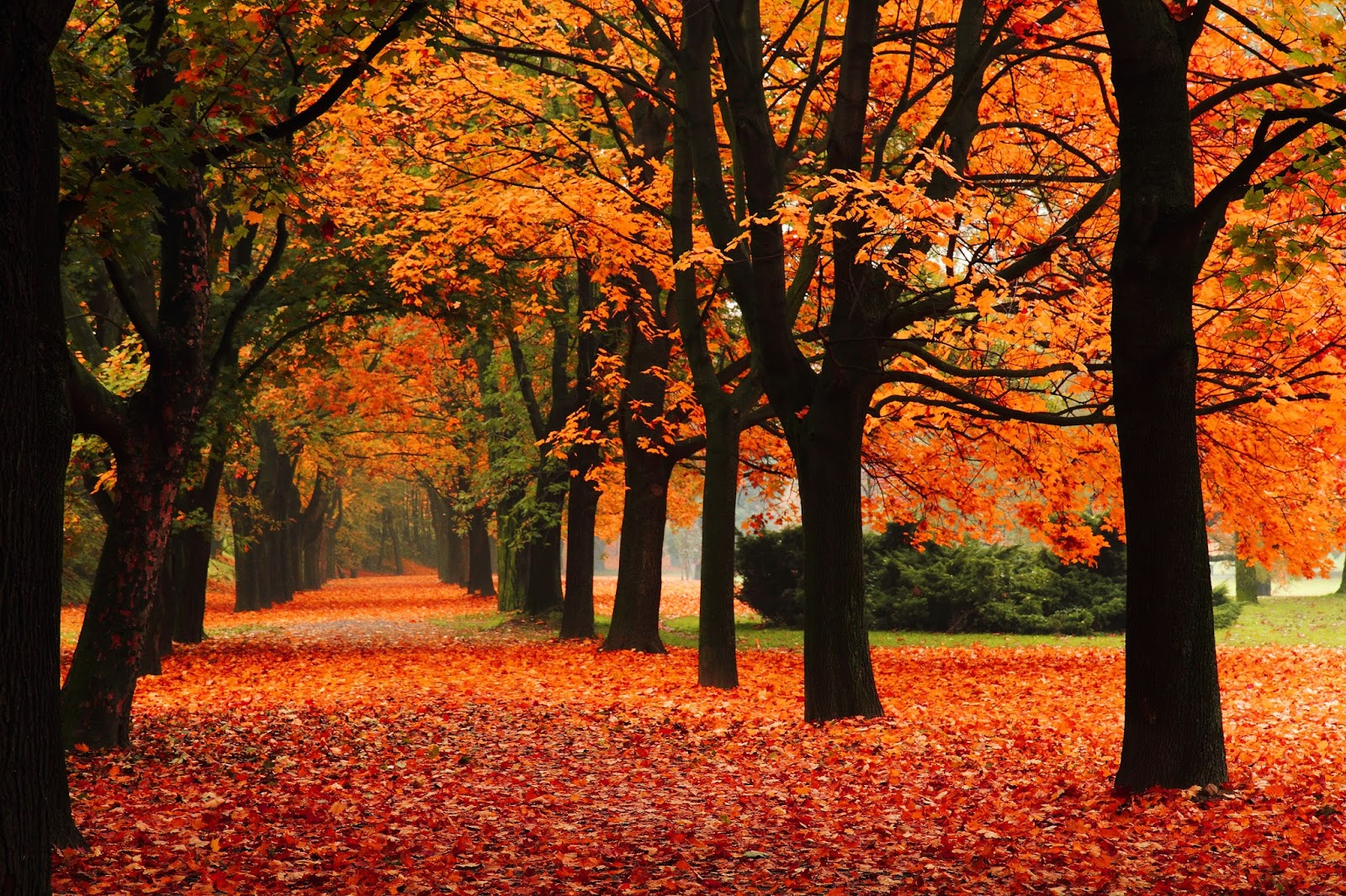 Best Spots to Admire the Fall Foliage  via  www.productreviewmom.com