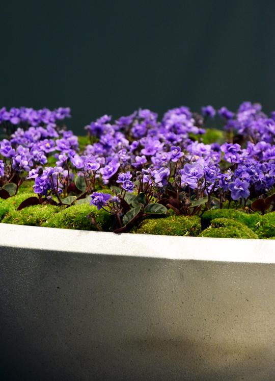 Växtkärlet Låg Blom, av Mårten Cyrén för Byarums Bruk, fylld med blå minisaintpaulia och bollmossa , på Stockholm Furniture Fair 2016 | www.var-dags-rum.se