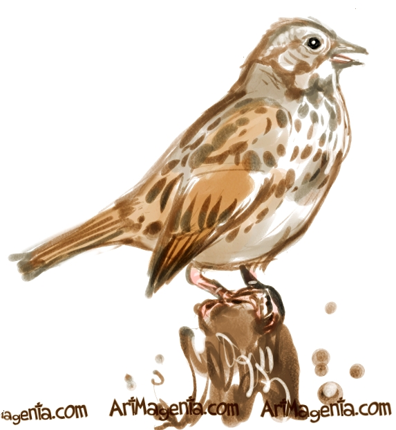 Song Sparrow sketch painting. Bird art drawing by illustrator Artmagenta