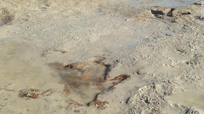 Μάζευε κοχύλια και εντόπισε αποτύπωμα δεινοσαύρου 130 εκατ. ετών