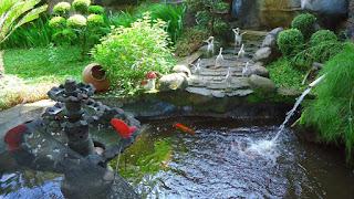 Tukang Taman Lamongan - Honay Landscape