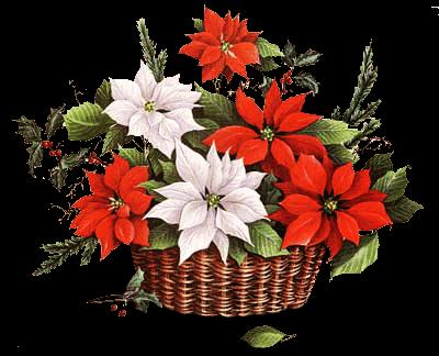Colecci n de gifs im genes de flores de navidad - Imagenes flores de navidad ...