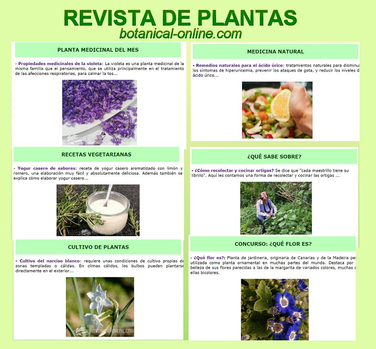 Blog de plantas for Cocinar ortigas