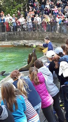 Seelöwenfütterung im Zoo Basel