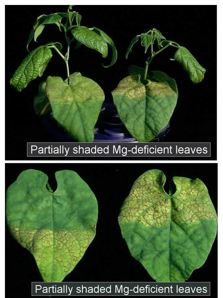 Managing Plant Nutrients: 2012