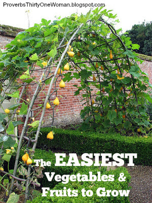 Merveilleux Easiest Vegetables U0026 Fruits To Grow