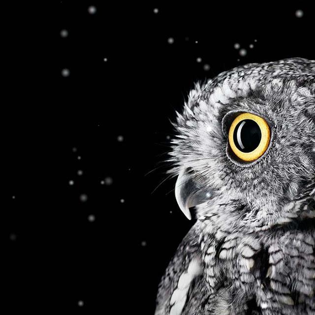 Owl Snow Wallpaper Engine