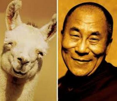 Happy Dalai Lama Mirip Hewan