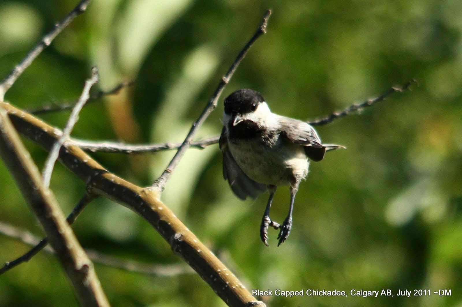 Nerdy For Birdy Birding In Calgary Ab