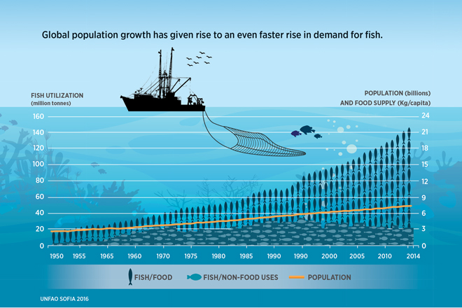 А рыбы то скоро не хватит на всех в мире...