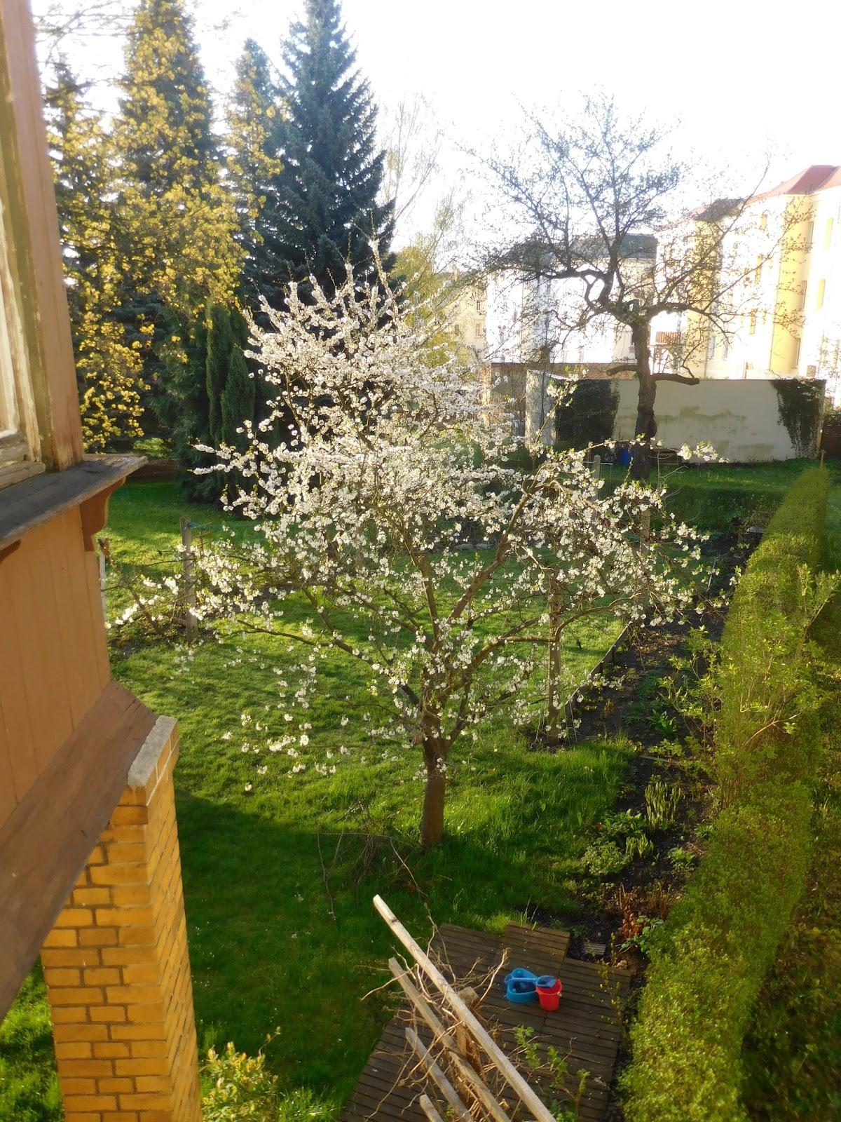 Villa türmchen: kirschblüte und seifenblasen